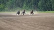 running horses  on hippodrome