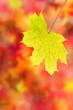 Herbst 23