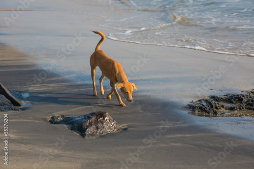 Dog on the shore of the ocean