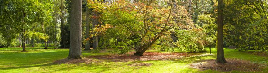 Autumn colours, Acer leaves