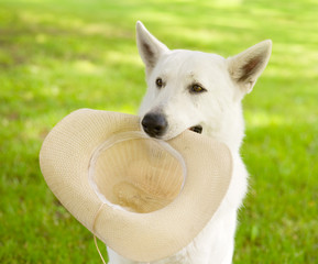 dog holding hat in his mouth