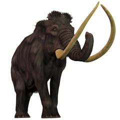Woolly Mammoth on White