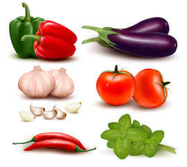 The big colorful group of vegetables. Vector illustration.