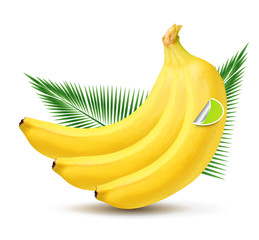 Vector banana with palm leaves isolated on white background