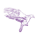 flying dove vector llustration realistic sketch