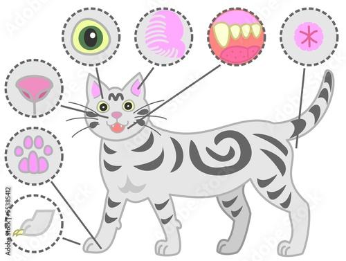 猫、健康診断、ボディパーツ