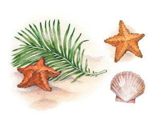 Watercolor illustrations of shells and starfish