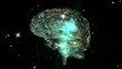 Human Brain Animation