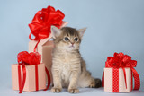 kitten sitting near a present box on blue background