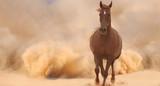 Horse run in desert - 55400086