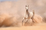 Horse run in desert - 55400090