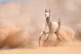 Horse run in desert - 55400090