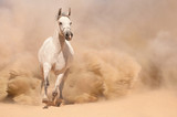 Horse run in desert - 55400094