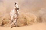 Horse run in desert - 55400094