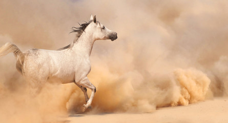 Horse run in desert