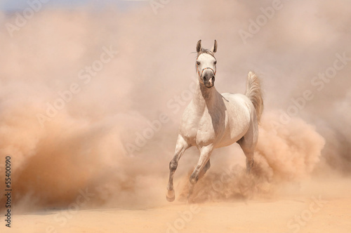 Horse run in desert