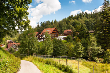 Summer in the Black Forest