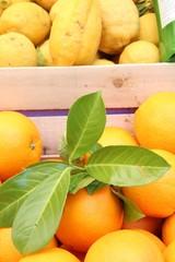 selling lemon juice tree in limone gardasee zitronenverkauf III