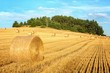 Harvested hilly wheat field
