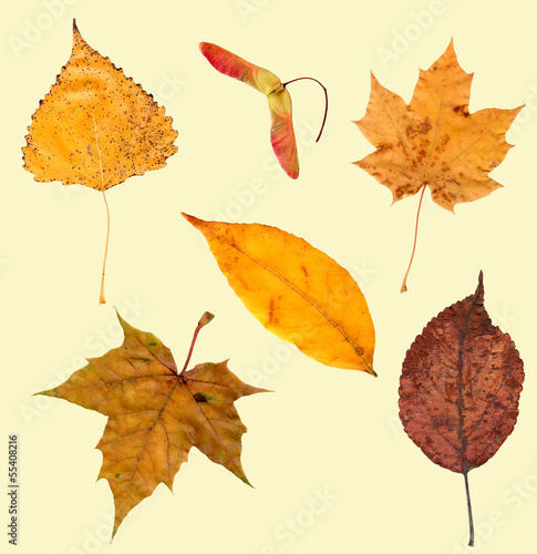 collection beautiful colorful autumn leaves