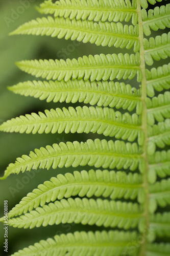Poster Landschappen fern leaves as a background on the nature