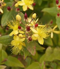 Flowers in an english garden in High Summer