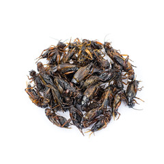 Fried insects isolated on white background