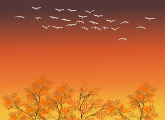 white swans above fall trees