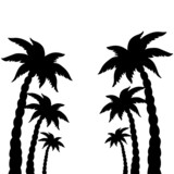 Set coconut palms trees silhouettes isolated on white background