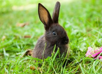 Rabbit on the grass
