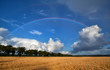 rainbow over wheat field after shower