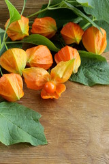 orange physalis berries with green leaves