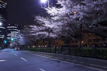 都会の夜桜