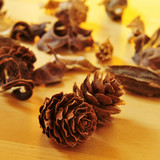 pine cones and dried flowers and leaves
