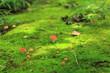 苔の道の可愛いキノコ達