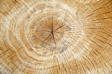 legno taglio albero centro stretto giallo