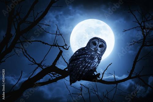 Papiers peints Oiseau Owl Watches Intently Illuminated By Full Moon On Halloween Night