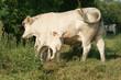 Animal ferme 96