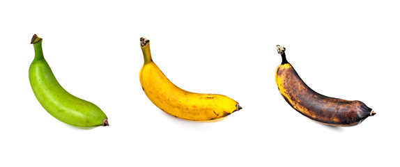 Plantain – Three Stages of Ripeness