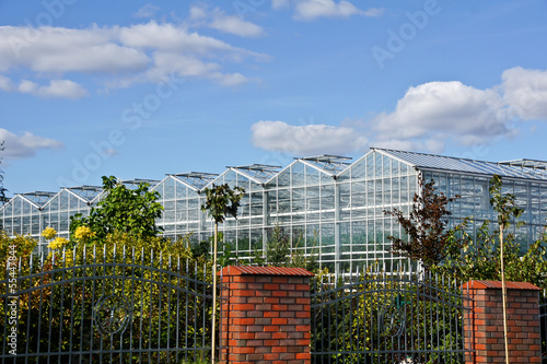 Greenhouse and shrubs