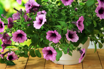 Purple petunia in flowerpot on wooden table on nature
