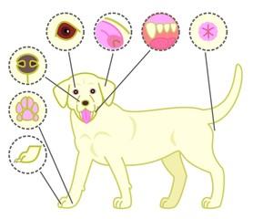 犬、健康、チェックポイント