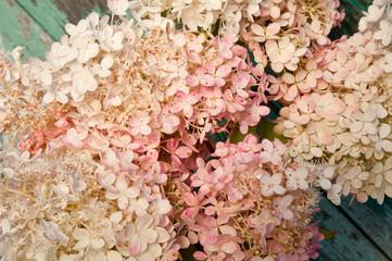 pink hydrangea floral fragment
