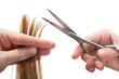 hands of hairdresser cutting woman's  hair