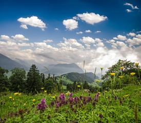 Schweiz: Almwiese mit Blick in Tal