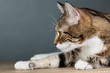 Portrait einer Katze