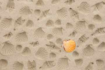 The prints of seashells on the sand