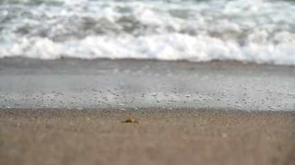 Beach, sea wave and human voices. HD video.