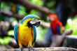 Obrazy drukowane na płótnie, fototapety, zdjęcia, fotoobrazy cyfrowe : Macaws