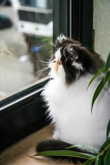 beautiful cat sitting on the window.  Cute kitten sitting on the